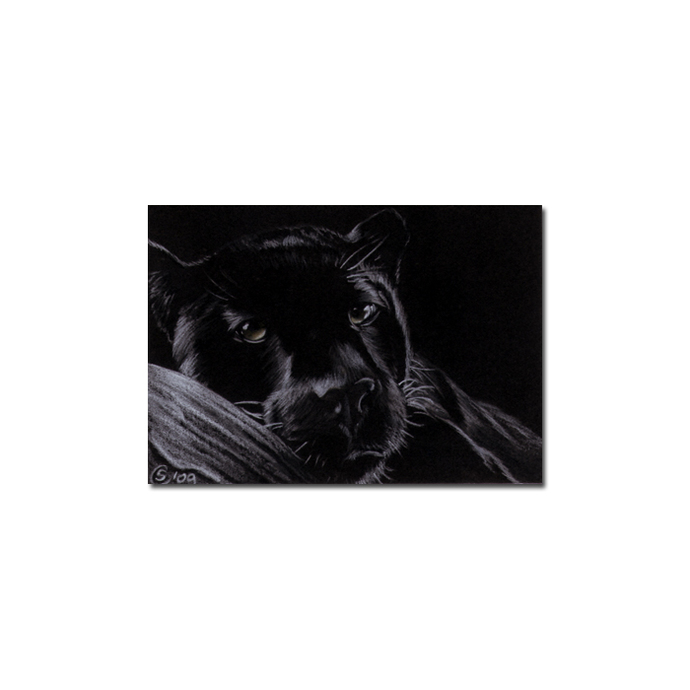 BLACK PANTHER 10 big cat animal feline pencil painting Sandrine Curtiss Art