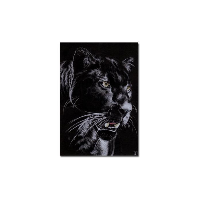 BLACK PANTHER 13 big cat animal feline pencil painting Sandrine Curtiss Art