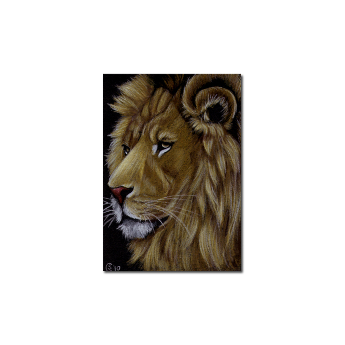 LION 16 portrait big cat feline pencil painting Sandrine Curtiss Art Limited