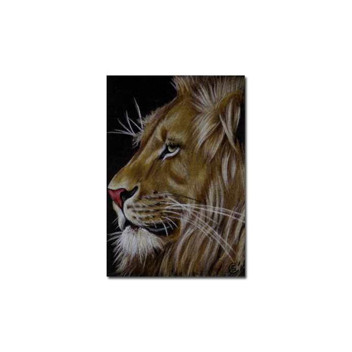 LION 17 portrait big cat feline pencil painting Sandrine Curtiss Art Limited