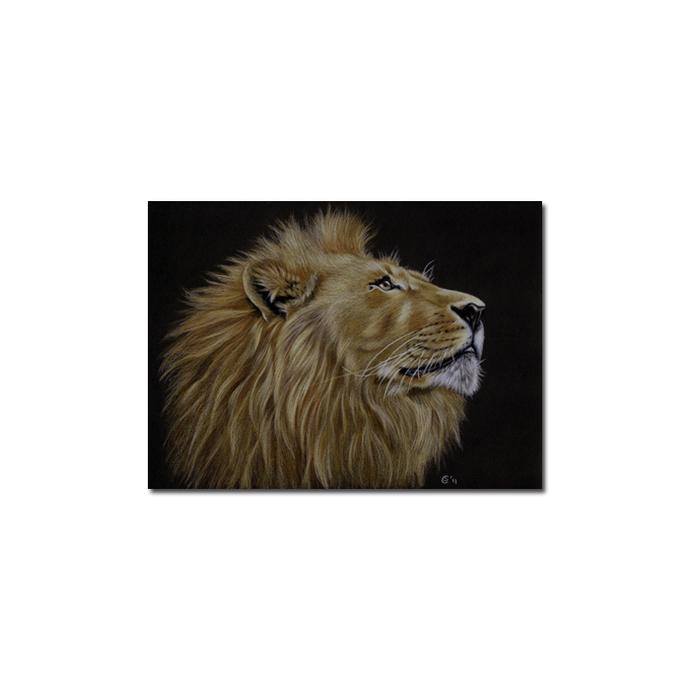LION 19 portrait big cat feline pencil painting Sandrine Curtiss Art Limited