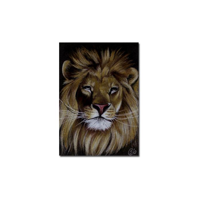LION 12 portrait big cat feline pencil painting Sandrine Curtiss Art Limited