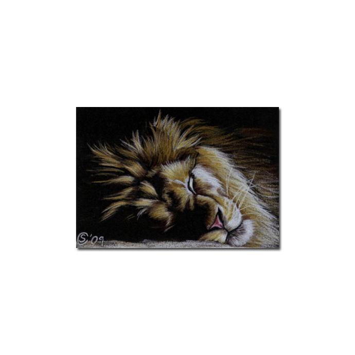 LION 11 portrait big cat feline pencil painting Sandrine Curtiss Art Limited