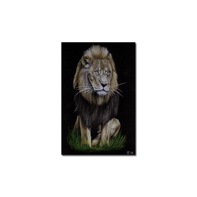 LION 7 portrait big cat feline pencil painting Sandrine Curtiss Art Limited