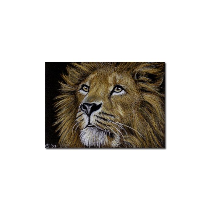 LION 5 portrait big cat feline pencil painting Sandrine Curtiss Art Limited
