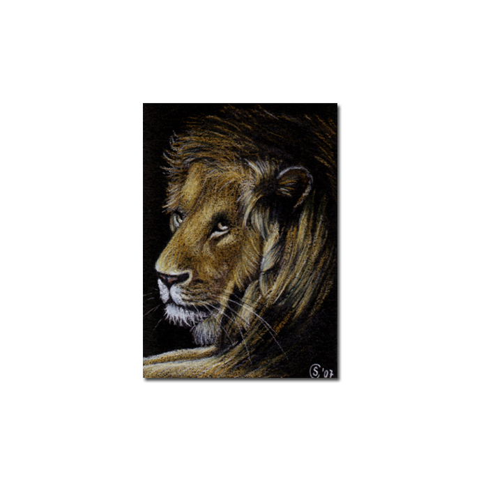 LION 4 portrait big cat feline pencil painting Sandrine Curtiss Art Limited