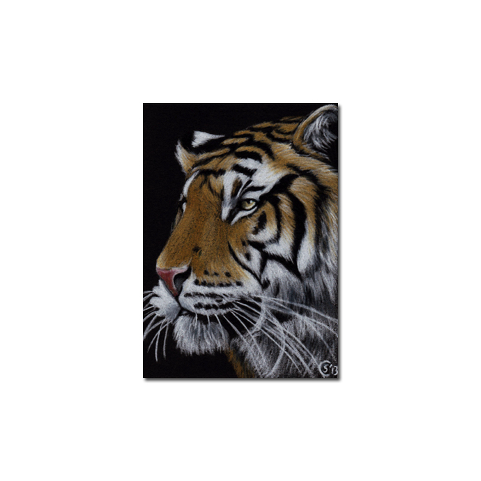 TIGER 45 portrait big cat feline pencil painting Sandrine Curtiss Art Limited