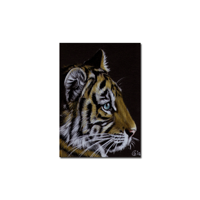 TIGER 40 portrait big cat feline pencil painting Sandrine Curtiss Art Limited