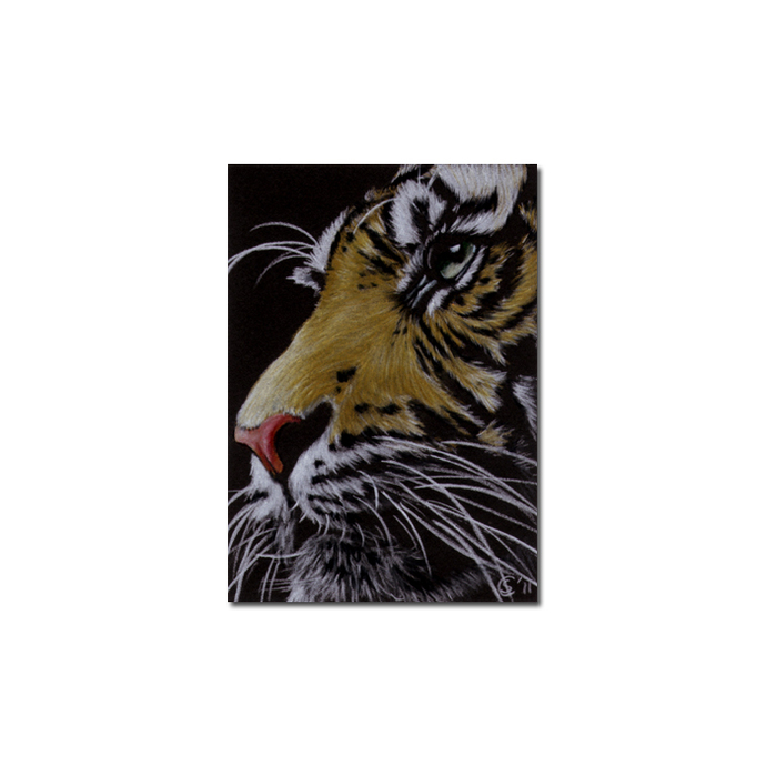 TIGER 38 portrait big cat feline pencil painting Sandrine Curtiss Art Limited