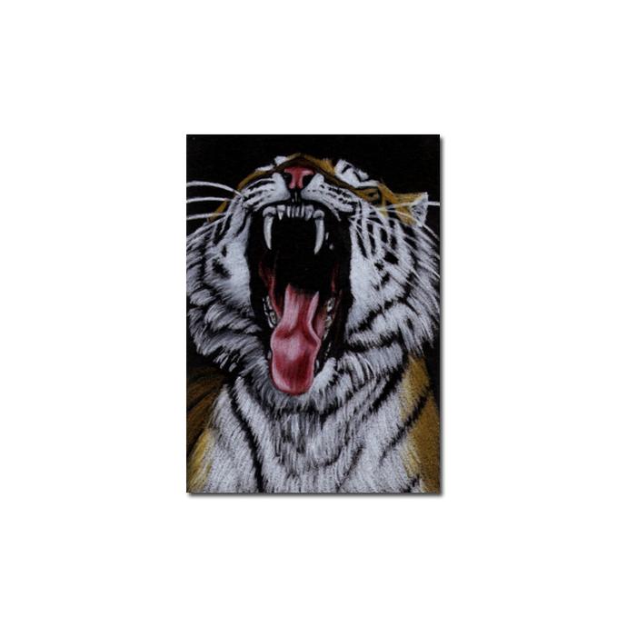 TIGER 20 portrait big cat feline pencil painting Sandrine Curtiss Art Limited