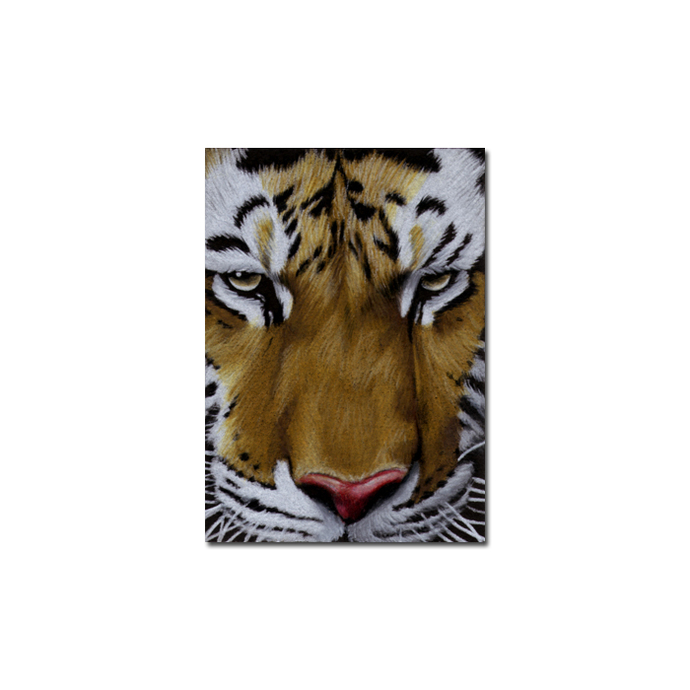 TIGER 17 portrait big cat feline pencil painting Sandrine Curtiss Art Limited