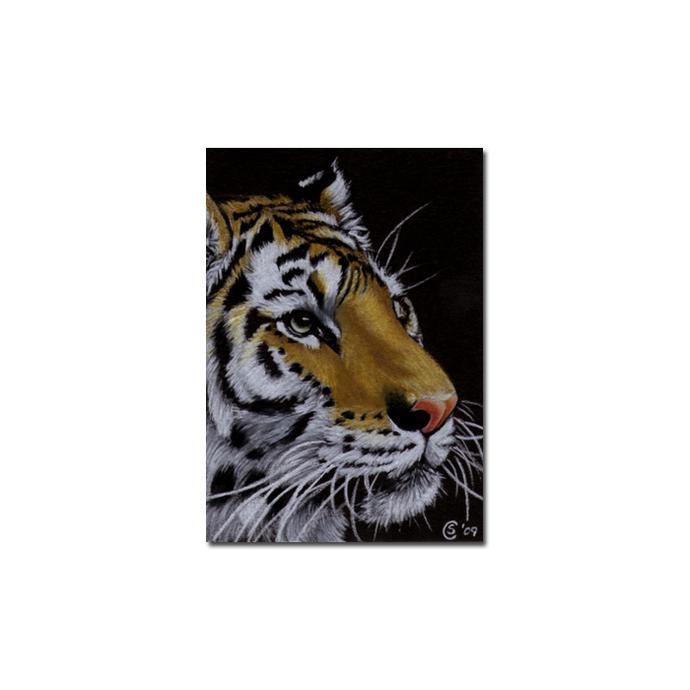 TIGER 15 portrait big cat feline pencil painting Sandrine Curtiss Art Limited