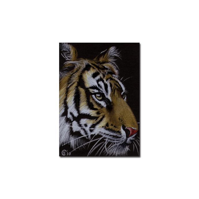 TIGER 33 big cat animal feline pencil painting Sandrine Curtiss Art Limited