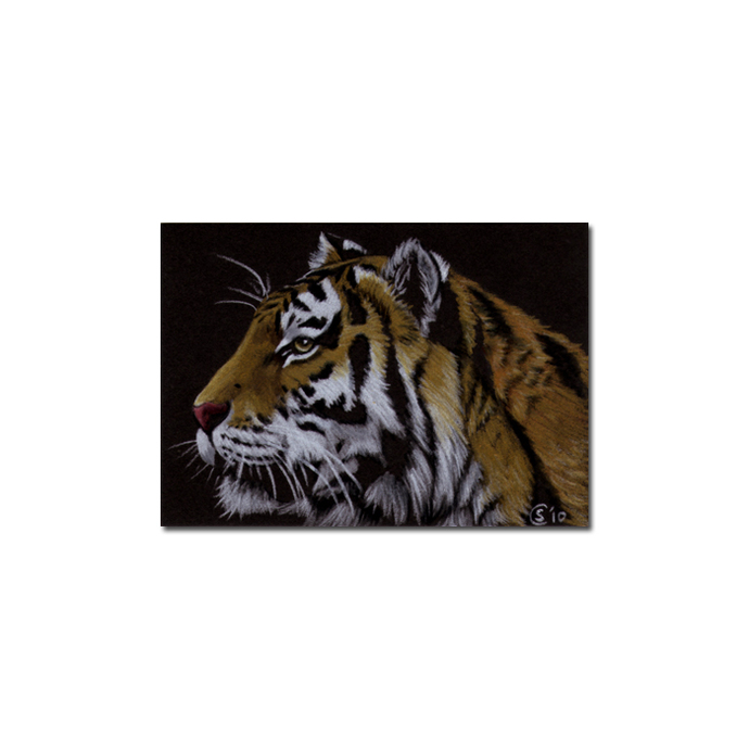 TIGER 31 big cat feline pencil painting Sandrine Curtiss Art Limited Edition