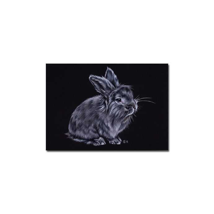 BUNNY 128 rabbit black dutch Easter pet pencil painting Sandrine Curtiss Art