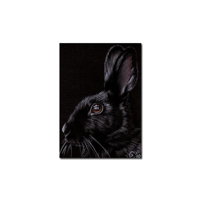 BUNNY 75 rabbit black dutch Easter pet pencil painting Sandrine Curtiss Art