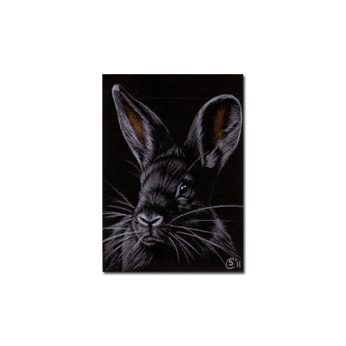 BUNNY 85 rabbit black dutch Easter pet pencil painting Sandrine Curtiss Art