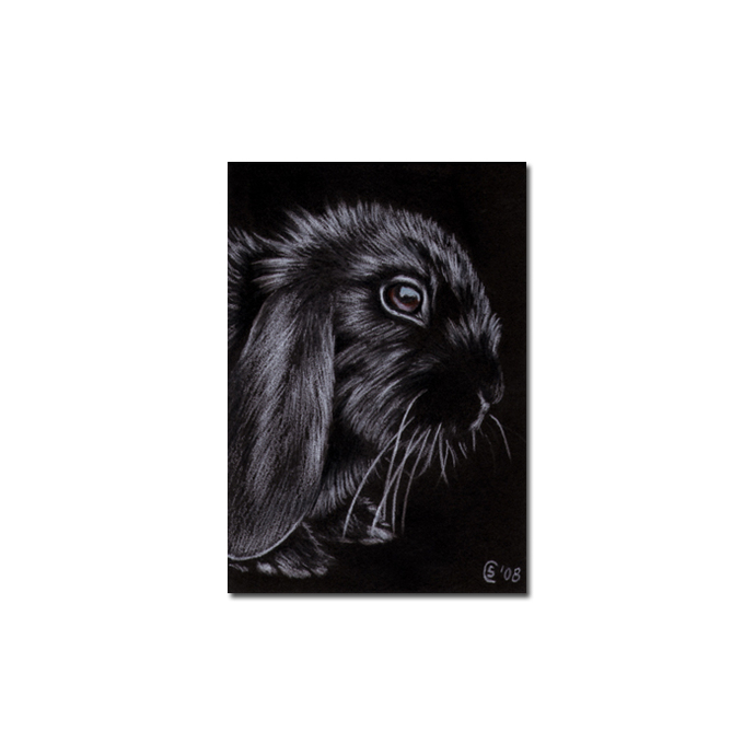 BUNNY 34 rabbit black dutch Easter pet pencil painting Sandrine Curtiss Art