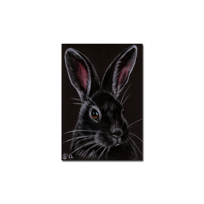 BUNNY 90 rabbit black dutch Easter pet pencil painting Sandrine Curtiss Art
