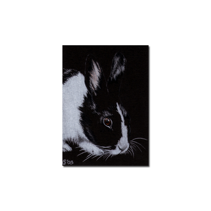 BUNNY 38 rabbit black dutch Easter pet pencil painting Sandrine Curtiss Art