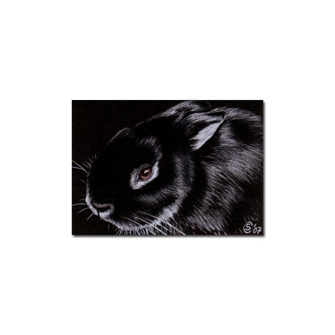 BUNNY 17 rabbit black dutch Easter pet pencil painting Sandrine Curtiss Art