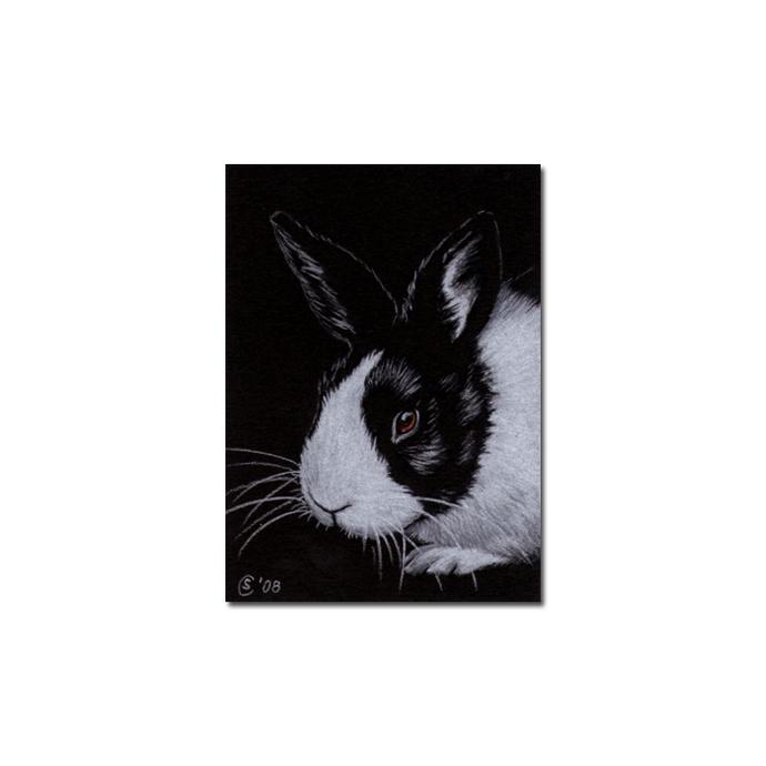 BUNNY 43 rabbit black dutch Easter pet pencil painting Sandrine Curtiss Art