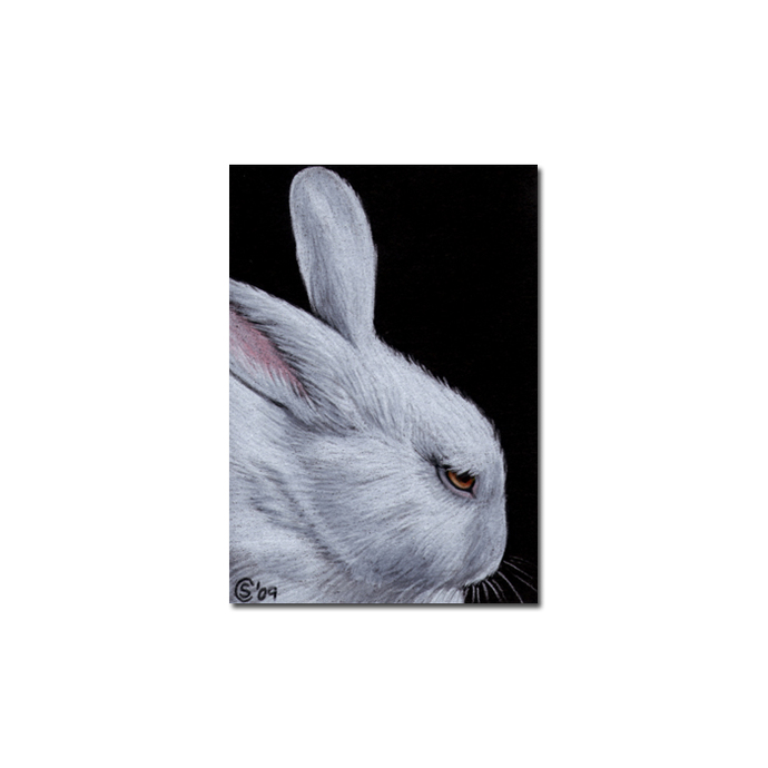 BUNNY 61 rabbit black dutch Easter pet pencil painting Sandrine Curtiss Art