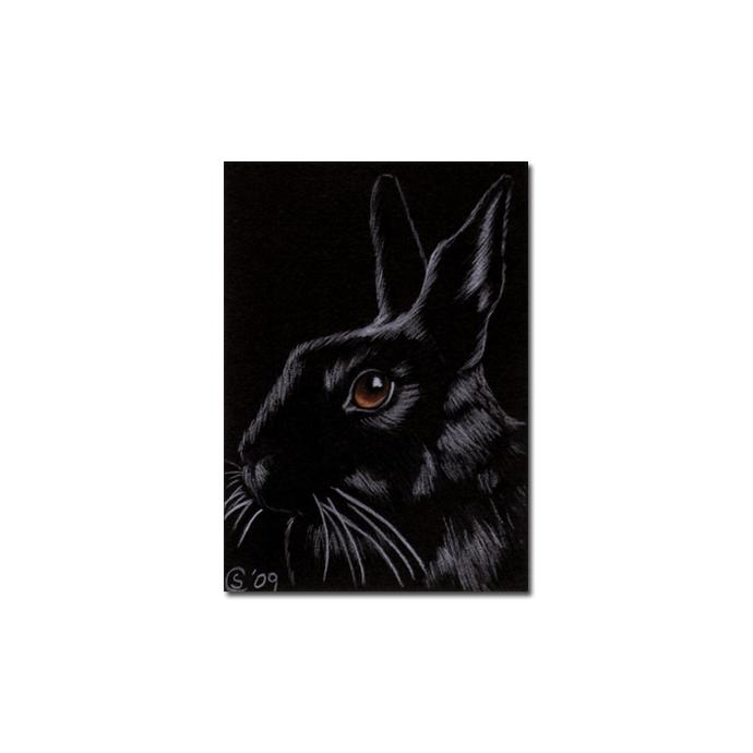 BUNNY 64 rabbit black dutch Easter pet pencil painting Sandrine Curtiss Art