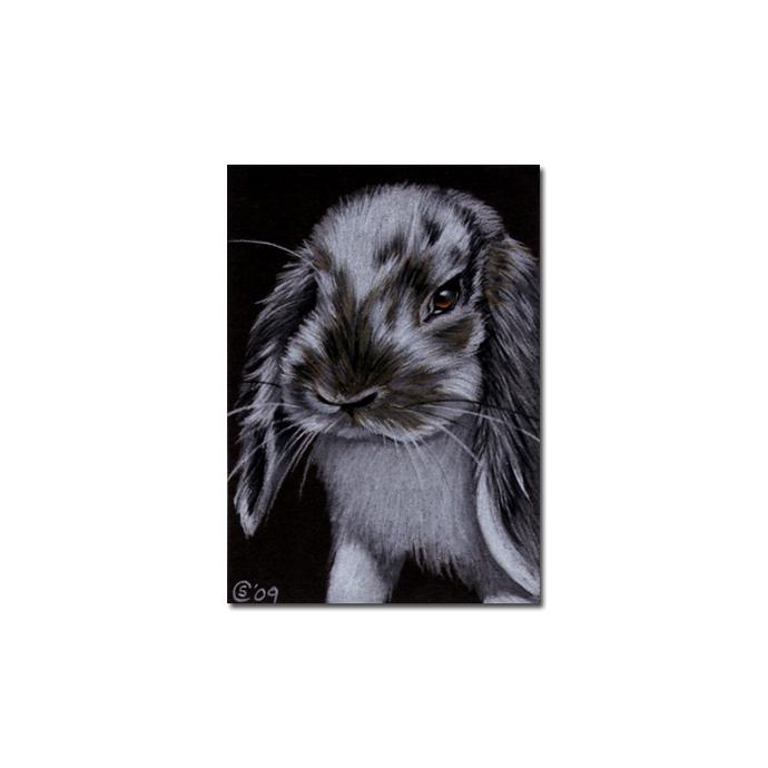 BUNNY 70 rabbit black dutch Easter pet pencil painting Sandrine Curtiss Art