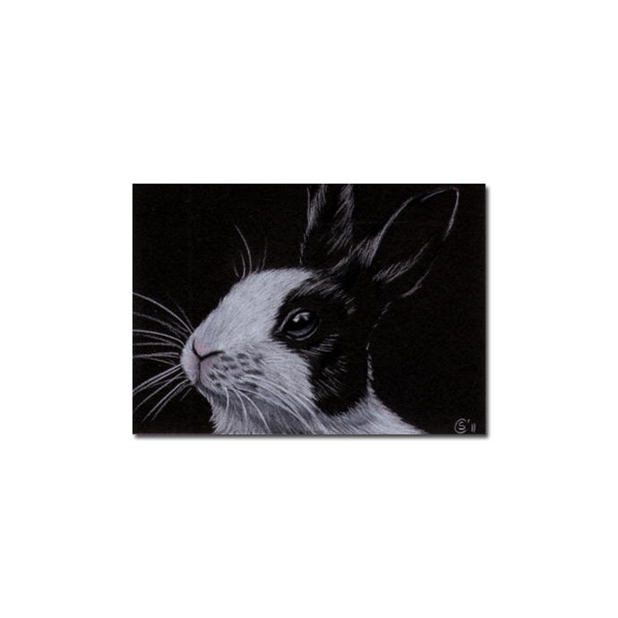 BUNNY 77 rabbit black dutch Easter pet pencil painting Sandrine Curtiss Art