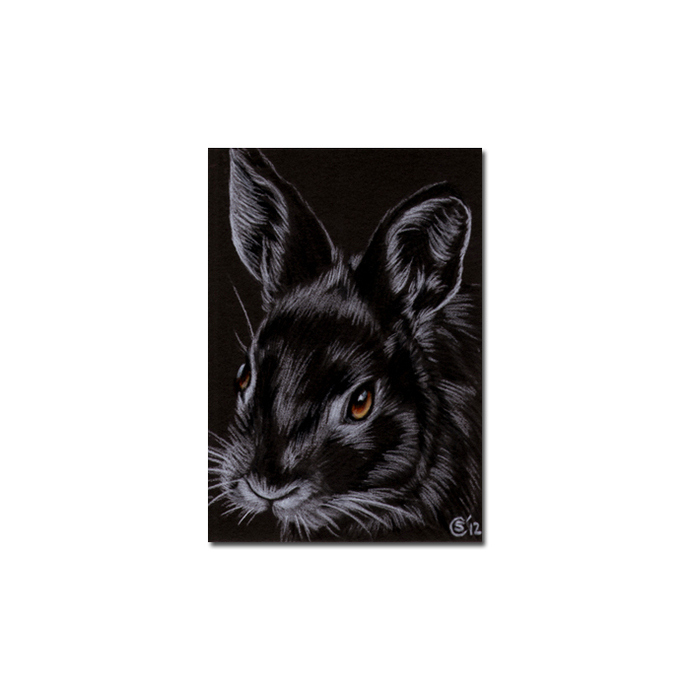 BUNNY 106 rabbit black dutch Easter pet pencil painting Sandrine Curtiss Art