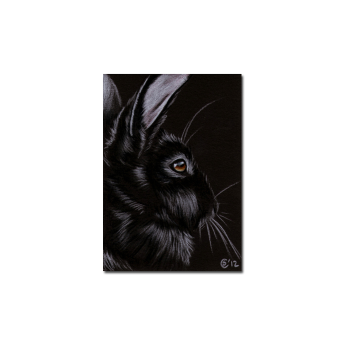 BUNNY 107 rabbit black dutch Easter pet pencil painting Sandrine Curtiss Art