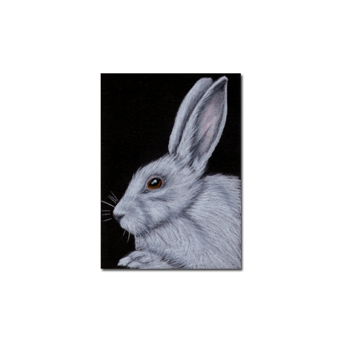 BUNNY 108 rabbit black dutch Easter pet pencil painting Sandrine Curtiss Art