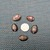 Mix of 5 Brown Cowrie Shells