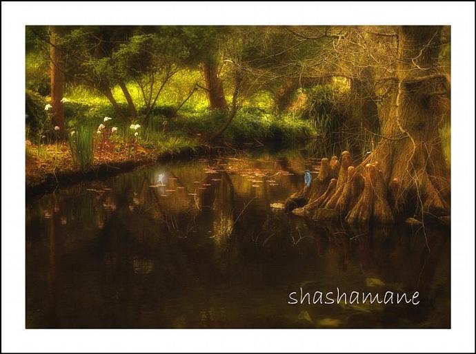 "Secret, Enchanted Lake 5 x 7"" fine art photography print - Magic scene"