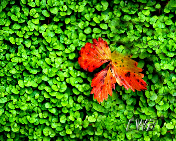 Lonely Leaf fine art print