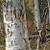 Kangaroo & Gum Tree - Wildlife photo signed matted