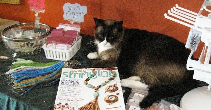 Original burma is waiting at the shop