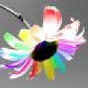 Profile spiderdaisy633634864