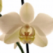 Profile orchidsorchard2109517669