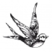 Profile freebird183185991