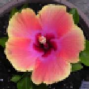 Profile calibama1953543935